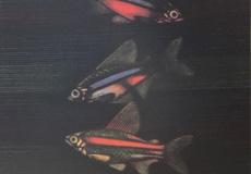 加山又造-熱帯魚