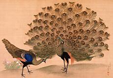 円山応挙-孔雀図