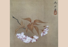 速水御舟-八重桜(枝折桜)