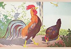 小林清親 鶏